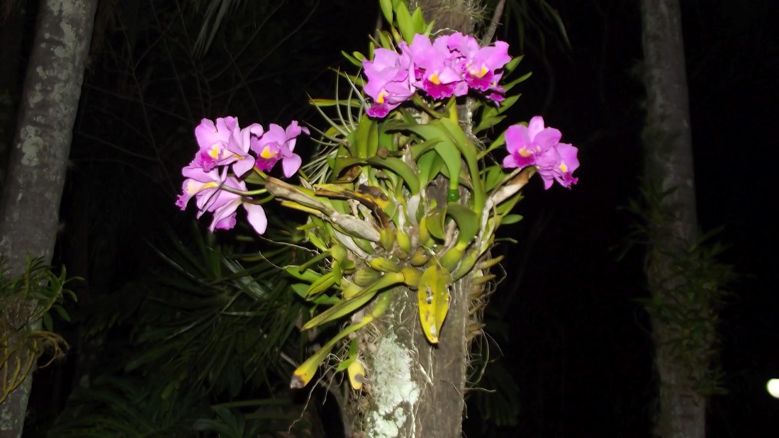 mesa jardim carrefour:Mas, como nem só de orquídea, vive um jardim, aqui outra que sempre