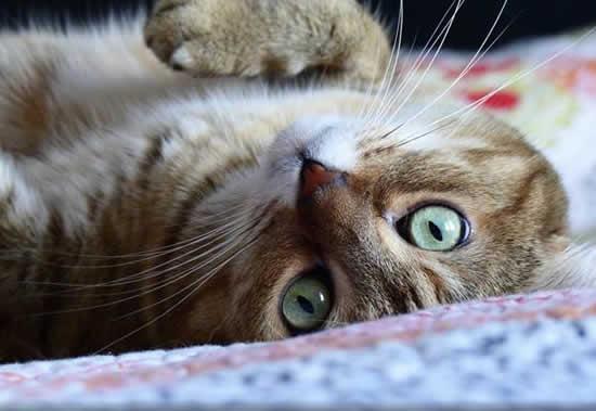10-sinais-dizem-que-seu-gato-ama-voce_06.jpg