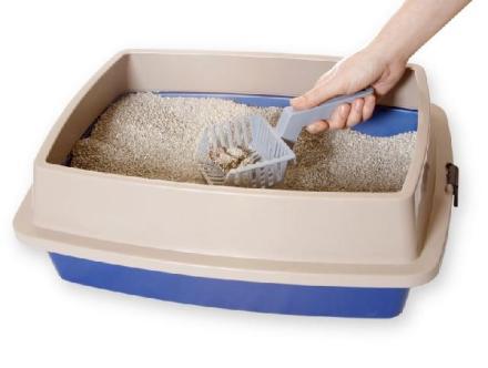 caixa-areia-gatos-felinos.jpg